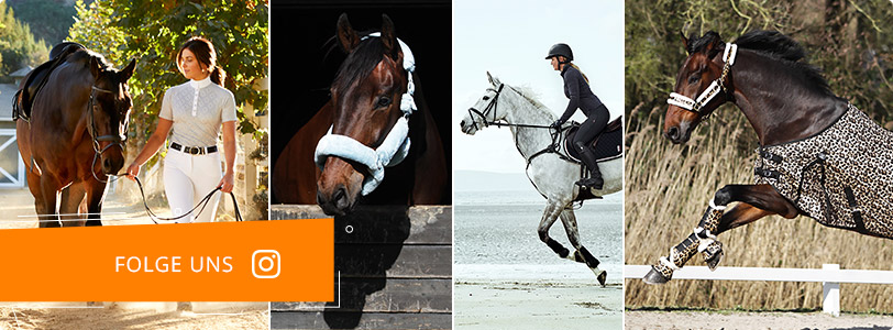 Anbinder Shires Bungee