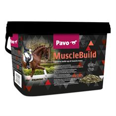 MuscleBuild Pavo