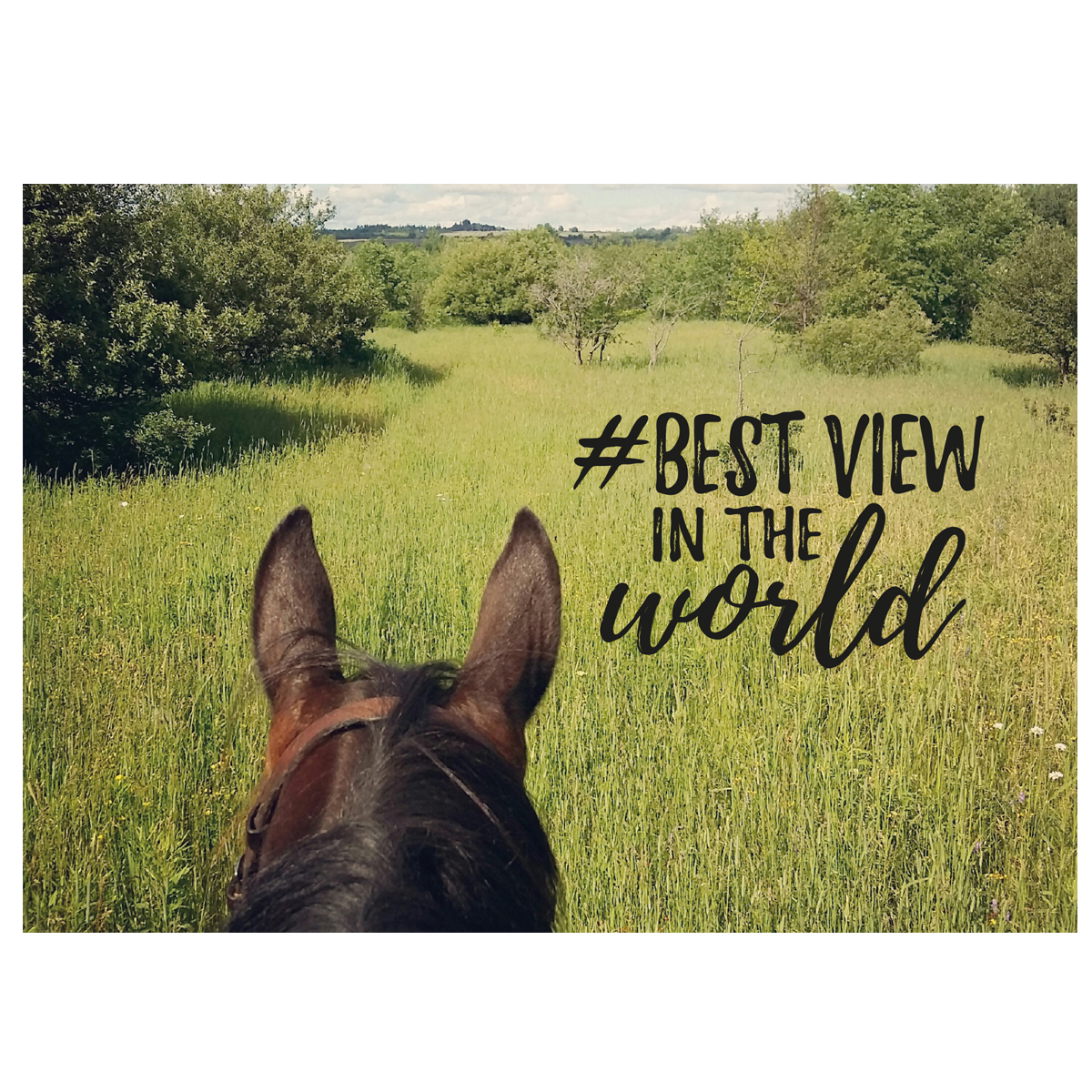 Postkarte Best View�in Divers