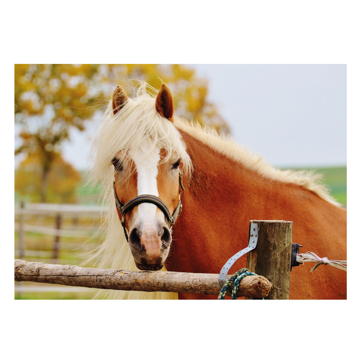 Postkarte Horse Life�in Divers