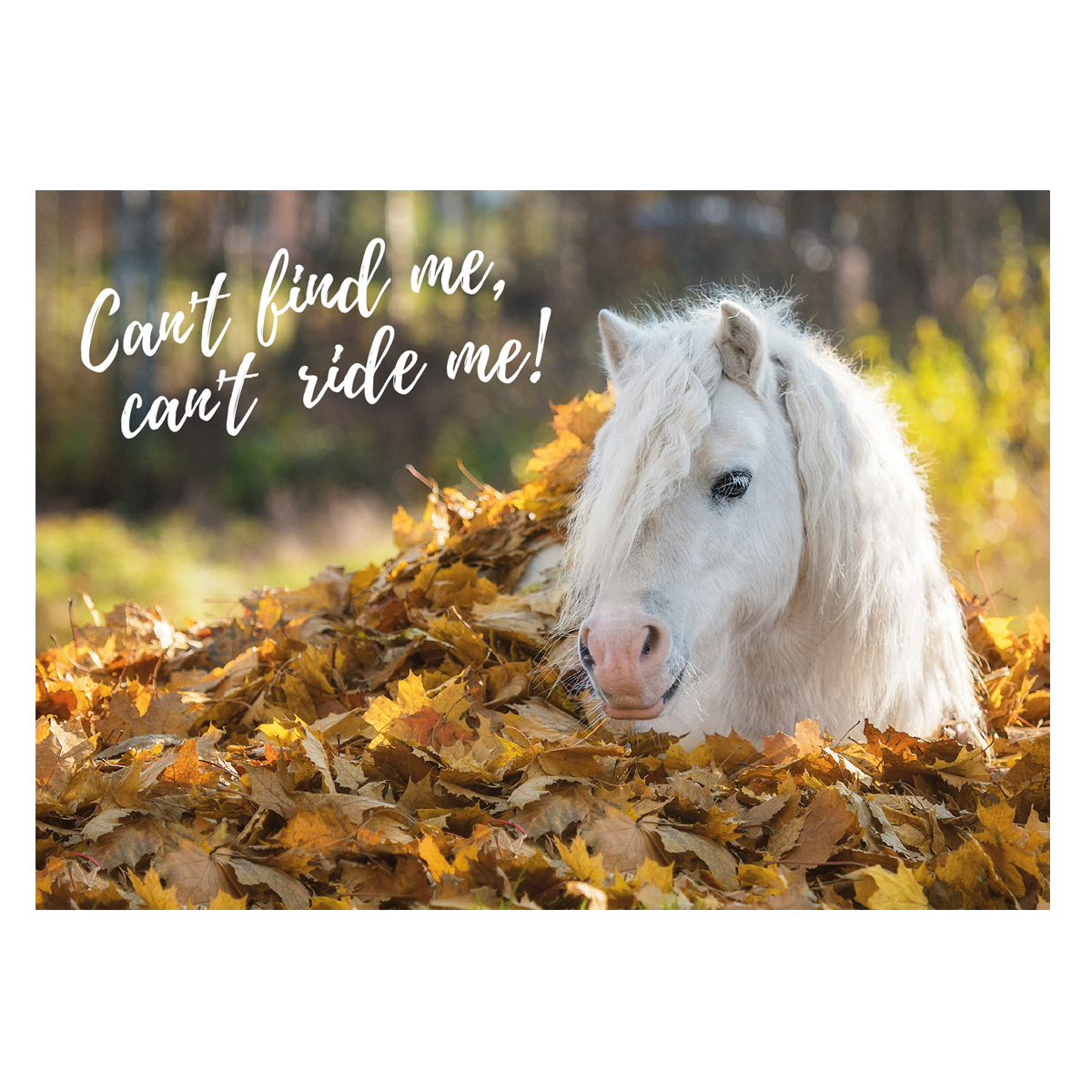 Postkarte Pony Herbst�in Divers